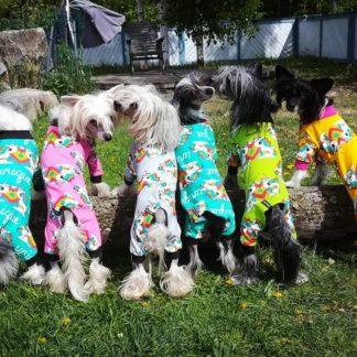 Koirien tuotteet - For dogs